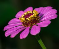 Die Farben des Purpurs stockfotografie
