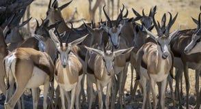 Die Fauna des Afrikaners Stockfotografie