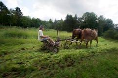 Die Felder pflügen die altmodische Methode Lizenzfreies Stockbild