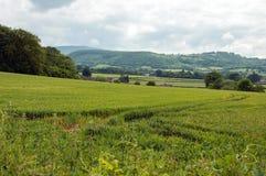 Die Felder und die Landschaft von England Stockfotografie