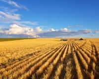 Die Felder von Montana lizenzfreies stockbild
