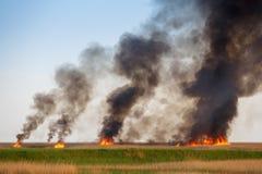 Die Feuer zerstören getrocknet herauf Felder des alten Stocks Lizenzfreies Stockbild