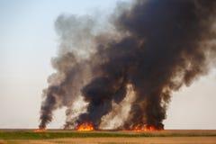 Die Feuer zerstören getrocknet herauf Felder des alten Stocks im ruhigen Sommerwetter Lizenzfreie Stockfotos