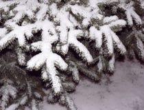 Die Fichtenzweige unter dem Schnee lizenzfreies stockfoto
