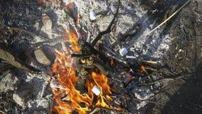 Die Firma steht in der Natur still Brateneibische auf einem Feuer im Wald am Nachmittag Ansicht von oben stock video