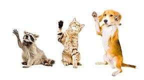 Die Firma von spielerischen lustigen Tieren stockfoto