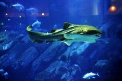 Die Fische Stockfotografie