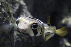 Die Fische stockbild