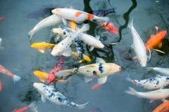 Die Fische im Park Lizenzfreie Stockbilder