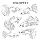 Die Fische sind Guppies Lizenzfreie Stockbilder