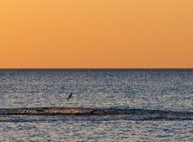 Die Fische springend in das Meer Lizenzfreies Stockfoto