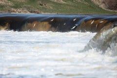 Die Fische springend in Wasserfall Stockfotos