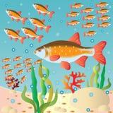 Die Fischmengen an einem Flussbett. Stockfotografie