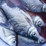 Die fish Stock Photography