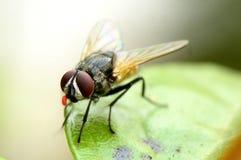 Die Fliege lizenzfreie stockfotografie