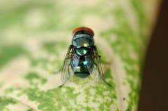 Die Fliege Stockfotografie