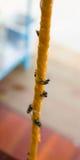 Die Fliege auf der Falle Stockfoto
