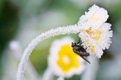 Die Fliege sitzt auf einer Blume stockfotos