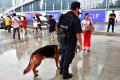 Die Fliegenklatsche und der Polizeihund Stockfotos