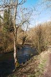 Die Fluss-Taube, Dovedale, Höchstbezirks-Nationalpark Stockbilder