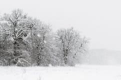 Die Forderung wird mit Schnee auf dem Horizont, den Bäumen und den Büschen durchgesetzt