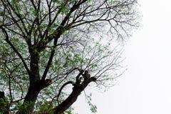 Die Form des Baums Lizenzfreies Stockbild