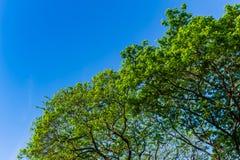 Die Form des Baums Stockfoto