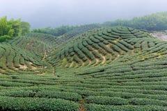 Die Form des Teegartens mögen Chinesen acht Trigrams Lizenzfreie Stockbilder
