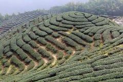 Die Form des Teegartens mögen Chinesen acht Trigrams Lizenzfreies Stockbild