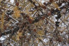 Die Früchte des Winters Lizenzfreies Stockbild