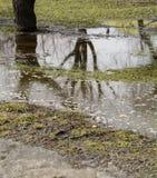 Die Frühlingsbäume, die im Wasser sich reflektieren, bedeckten die Erde Stockbild