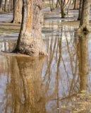 Die Frühlingsbäume, die im Wasser sich reflektieren, bedeckten die Erde Stockfoto
