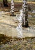 Die Frühlingsbäume, die im Wasser sich reflektieren, bedeckten die Erde Lizenzfreie Stockbilder