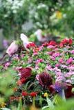 Die Frühlingsblumen haben geblüht lizenzfreie stockfotografie