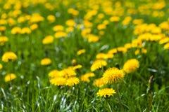 Die Frühlingswiese Lizenzfreies Stockbild