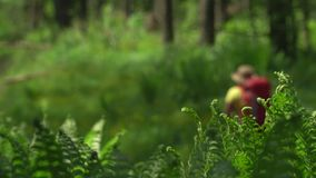 Die Frau der Reisende mit einem roten Rucksack und Stöcken für die Spurhaltung geht auf das Holz Berggebiet stock video
