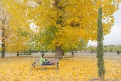 Die Frau, die auf einer Parkbank mit Gelb sitzt, lässt das Fallen von den Bäumen stockbilder