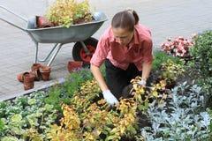 Die Frau, die heraus pflanzt, blüht Stockfotografie