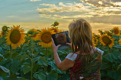Die Frau fotografiert Sonnenblumen Lizenzfreie Stockfotos