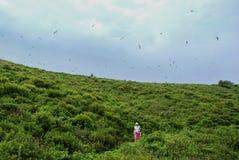 Die Frau ist auf dem Hügel und die Seemöwen fliegen über ihn Lizenzfreie Stockfotografie