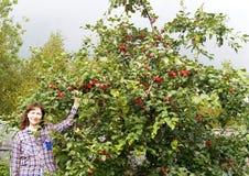 Die Frau steht nahe einem Applebaum Lizenzfreie Stockfotografie