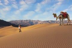 Die Frau - Tourist, der das Kamel fotografiert lizenzfreies stockbild