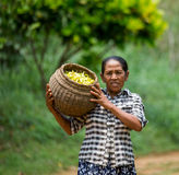 Die Frau trägt einen Korb mit dem Ilang-Ilang Lizenzfreies Stockfoto