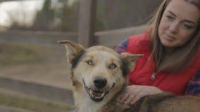 Die Frau verkratzt den Hund, der seinen Kopf dreht, der braunen, bunten Pelz und hellblaue Augen hat stock video