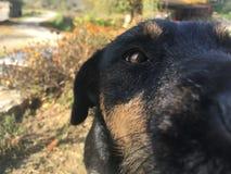 Die Freunde des Mannes, selfi Hund lizenzfreie stockbilder