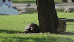 Die Freundschaft einer Schildkröte und des Kaninchens stock video