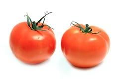 Die frische rote Tomate Lizenzfreies Stockfoto