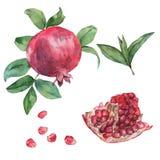Die Frucht des Granatapfels mit einer Scheibe, Blättern und Körnern Lizenzfreies Stockbild