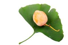 Die Frucht und die Blätter von Ginkgo biloba lizenzfreie stockfotos