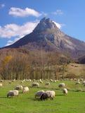 Die Fuß Menge der Schafe, die bei Navarre weiden lassen Stockbilder